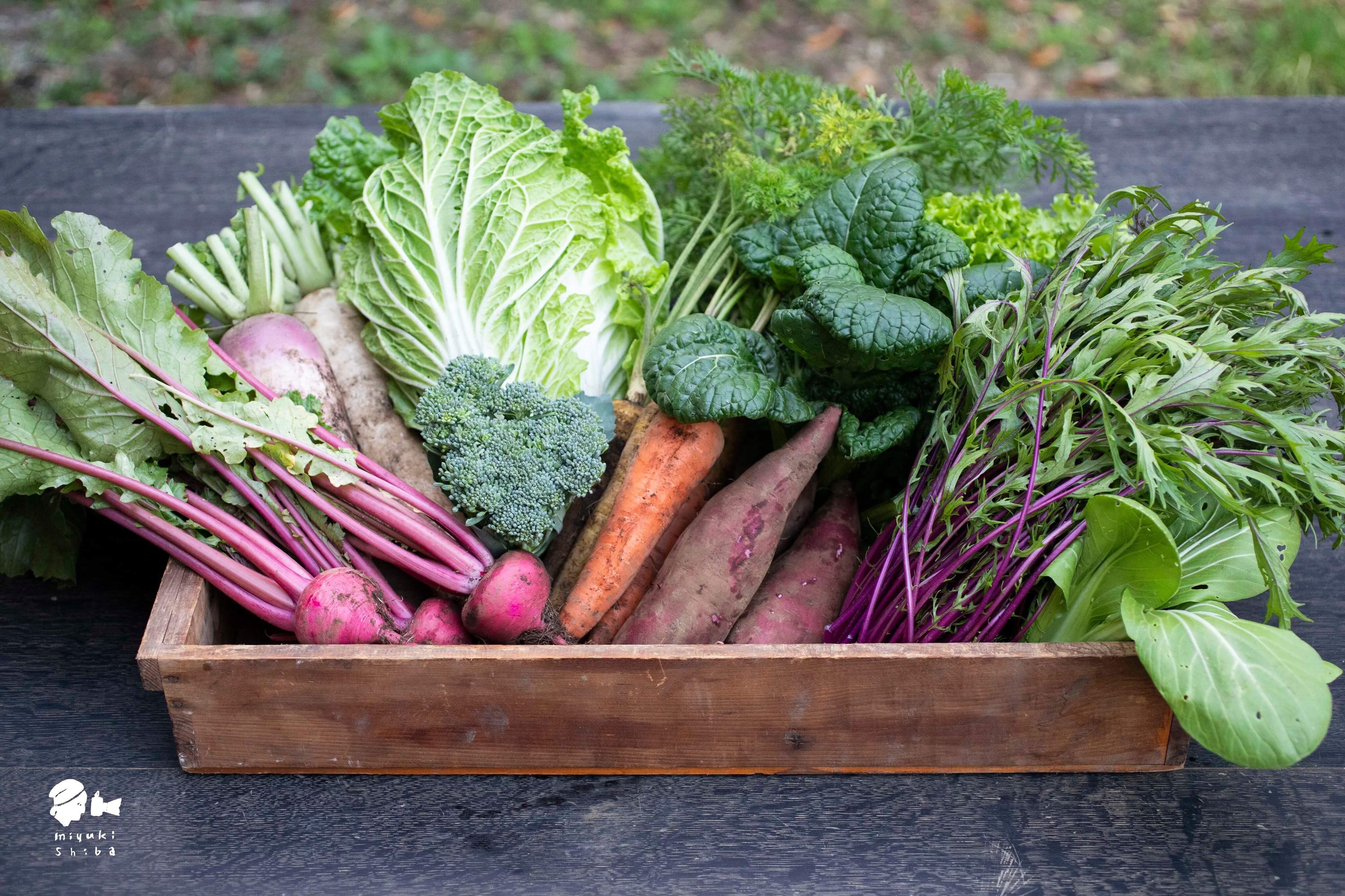 わたね農園のお野菜セット